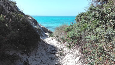 Nature reserve wwf proected area of Torre Guaceto - Dunes
